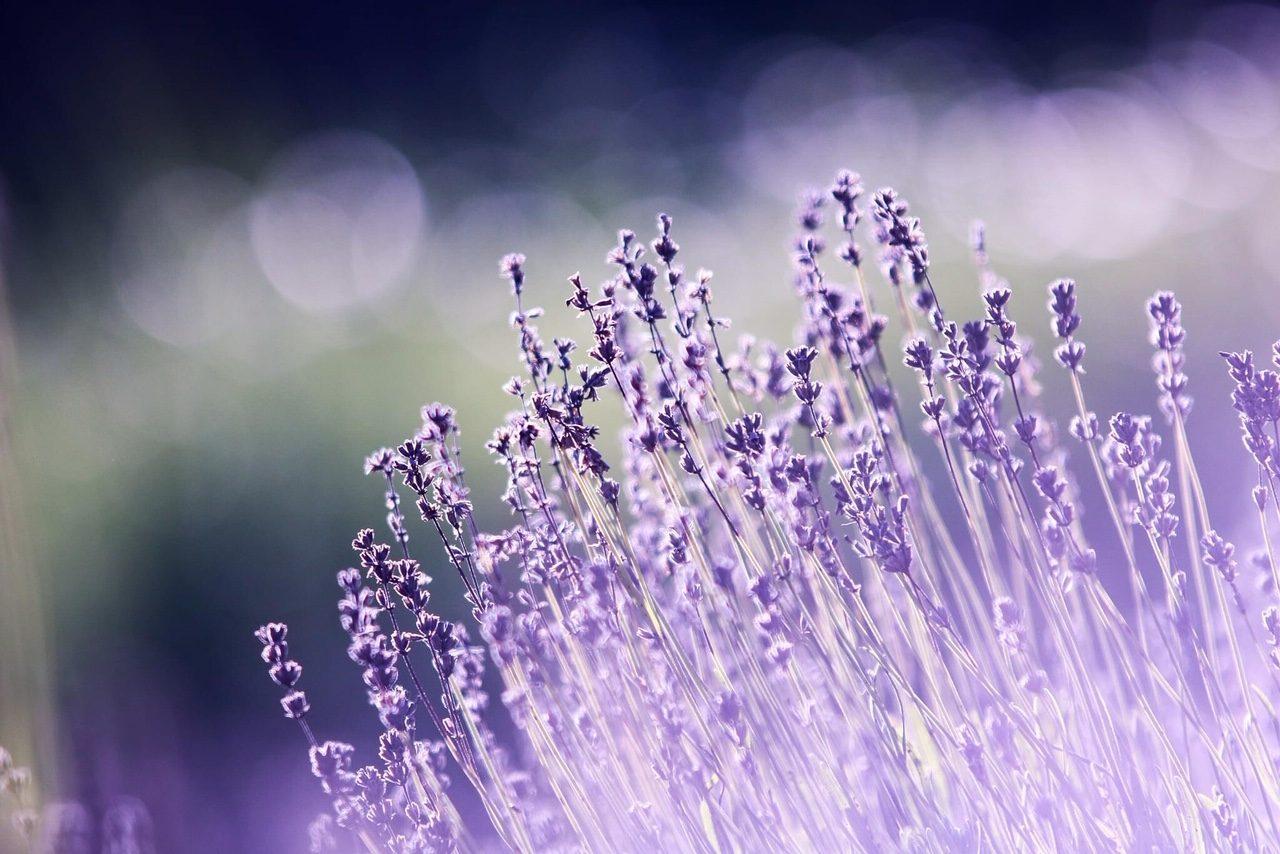 soul-food-lavendel
