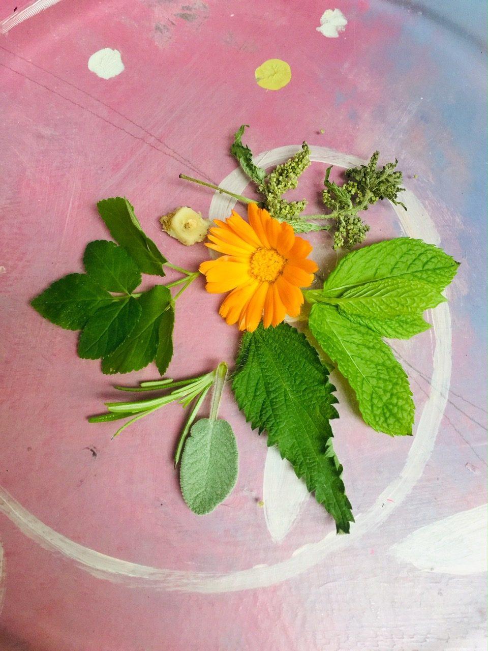 wild-herbs-love