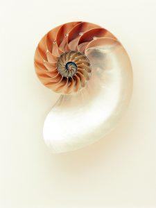 eine nach links in die Mitte drehende Spirale. Es ist eine Muschelform